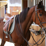 Primary program for horse saddle sales and manufacturing company